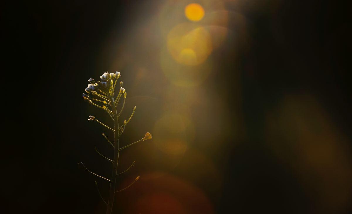 Photo by Trang Ta on Unsplash